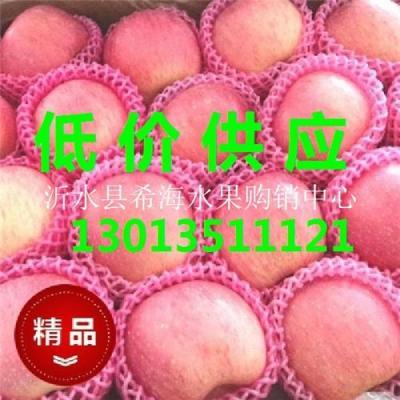 山东膜袋纸袋纸夹膜红富士苹果正在热卖中