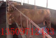 山西大型四川肉牛價格四川肉牛價格補貼政策