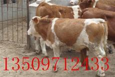 福建肉牛價格行情福建肉牛價格報價精準扶貧