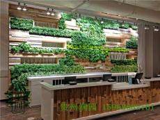 貴陽植物壁畫設計公司在畢節和遵義均設有