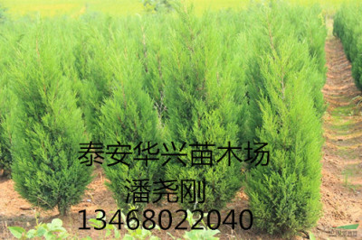 供应优质蜀侩 4米蜀侩 4米蜀侩价格