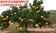 重庆哪里卖葡萄柚苗 重庆红葡萄柚苗供应