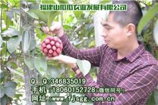 北京布福娜苗木优惠促销 山瓜瓜