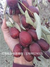 隴南新疆紅棗批發多少錢