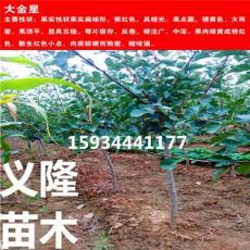 3公分山楂树 3公分山楂树价格