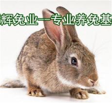 商洛伊拉肉兔養殖場 延安比利時肉兔價格