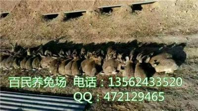 江西会昌哪里有大型的肉兔养殖场