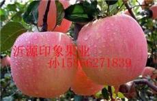 山東紅富士蘋果