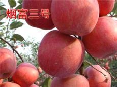 春天授粉是M9T337矮化蘋果苗的授粉關鍵