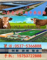 赣州养牛场