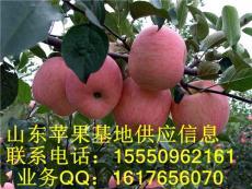 岱崮苹果岱崮冷库苹果