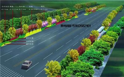 贵阳城市街道绿化施工公司负责息烽小区绿化