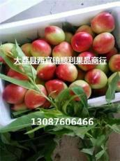 陜西早熟油桃最有名的產地在哪