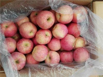 今日苹果批发价格