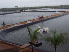 许昌长葛漯河舞阳那有养鱼池专用膜塑料布膜