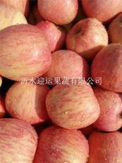 今天蘋果多錢一斤