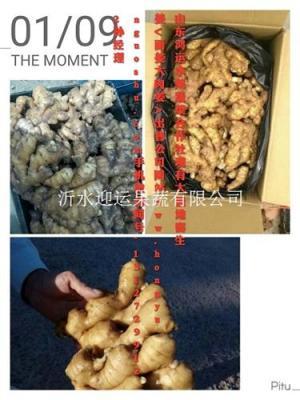 今日生姜多钱一斤