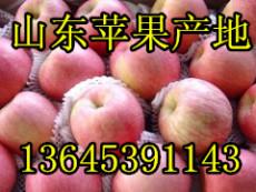 山东库存红富士苹果今日价格山东苹果产地