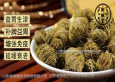 济南铁皮石斛是 轻身延年 的圣药