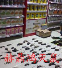 广西柳州酒店装修白蚁防治 灭鼠 灭蟑螂