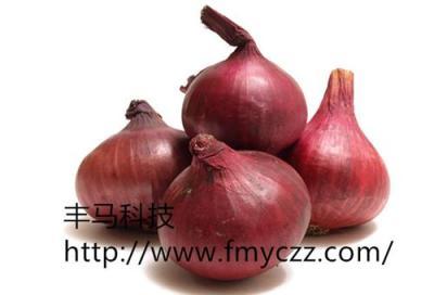 供应优质洋葱种子批发价格北岛红皮洋葱