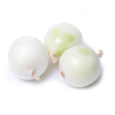 供应优质洋葱种子批发价格北岛白皮洋葱