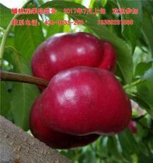蟠桃品種苗