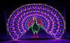焦作灯光节市场怎么样 还可以做灯光节吗