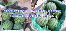 山東臨沂沂水縣哪里西瓜價格便宜種植基地