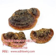 江苏省南韩灵芝一斤多少钱