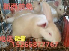 养殖肉兔品种赚钱一只肉兔的价格