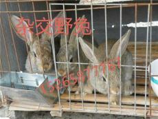 甘肃肉兔养殖场 哪个肉兔种兔好饲养