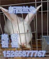 贵州毕节大型肉兔养殖场 贵州肉兔批发市场