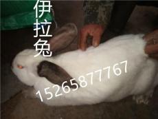 养兔 贵州獭兔养殖场 毕节肉兔养殖场