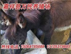 柳州改良肉驴在哪里买