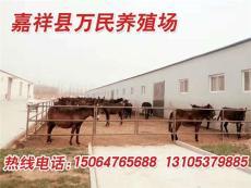 阿拉善盟肉驢市場價格