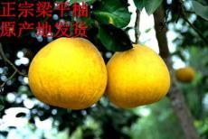 重庆特产梁平药柚 梁平柚子的价格与功效
