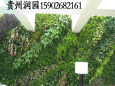 貴陽室內外墻上種植植物形成智能植物墻