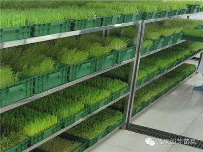 潍坊益康园富氧水发生器富养芽苗菜必备