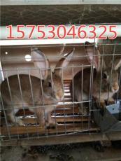 山西杂交野兔养殖场 哪里有卖杂交野兔的吗