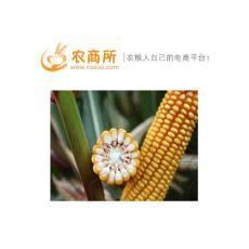 安徽玉米行情分析农商所 安徽玉米今日行情