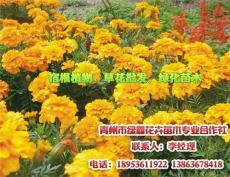 绿化苗木栽培 多年生水生植物