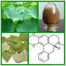 純天然荷葉提取物 荷葉浸膏粉 荷葉堿2%