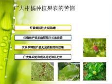 廣西桂林臨桂縣柑橘紅蜘蛛為什么越來越多
