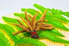 天河常年回收冬蟲夏草 長期回收冬蟲夏草
