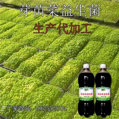 绿豆芽长得好用益生菌种植方便简单