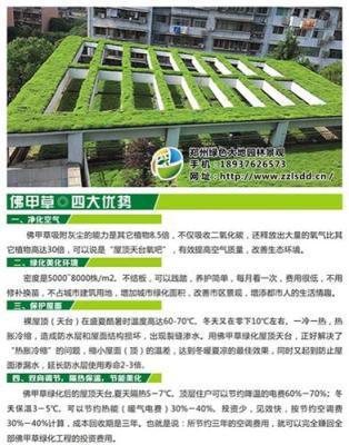 郑州惠济区佛甲草屋顶绿化工程哪家专业