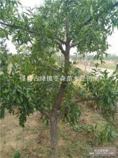 占地桃树价格 3公分-5公分-6公分-8公分