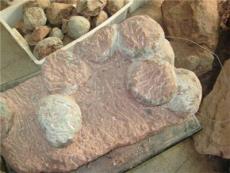 专业四连体恐龙蛋化石鉴定机构在哪