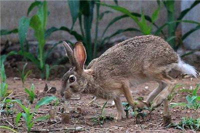 兔舍建造要求 兔子养殖场 种兔育种需要条件